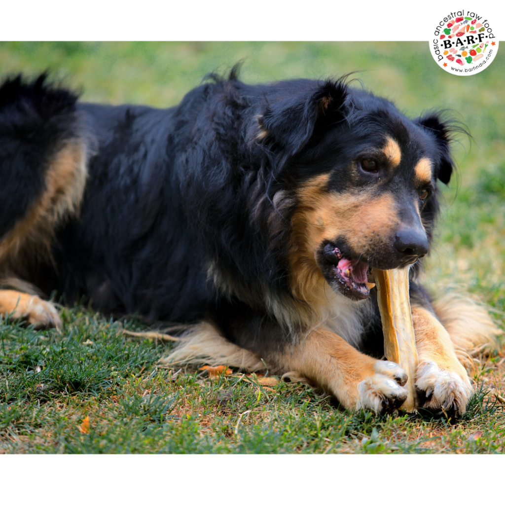 Raw bone treats - Why they help your dog?