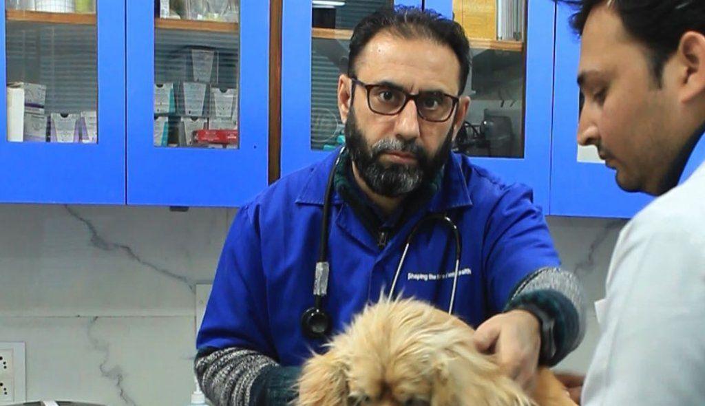 Metro Pet Hospital