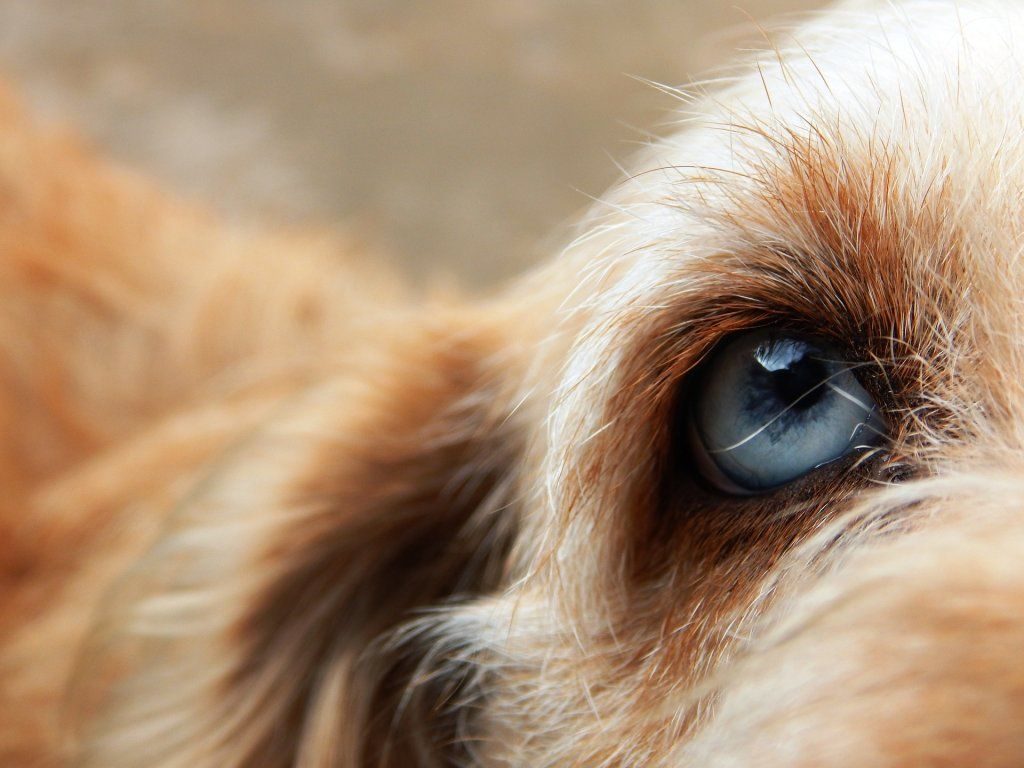 Are Dogs Really Colour BIind?