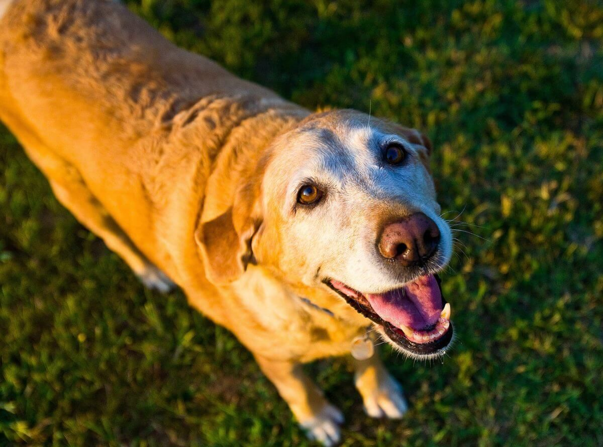 14 Symptoms That Shows That Your Dog Has Started To Get Older | Dogspot.in