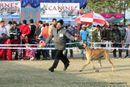 Amritsar Dog Show 2012 | ex-175,great dane,sw-65,