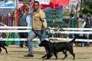 Amritsar Dog Show 2012 | ex-114,labrador retriever,sw-65,
