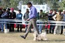 Amritsar Dog Show 2012 | ex-70,shih tsu,sw-65,