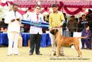 Amritsar Kennel Club | bull mastiff,reserve best in group,sw-136,