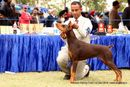 Amritsar Kennel Club | doberman pinscher,ex-160,sw-136,