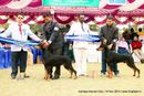 Amritsar Kennel Club | bob,doberman pinscher,rbob,sw-136,