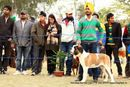 Amritsar Kennel Club | ex-214,saint bernard,st bernard,sw-136,