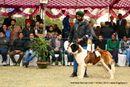 Amritsar Kennel Club | ex-208,saint bernard,st bernard,sw-136,