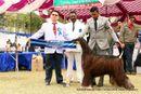 Amritsar Kennel Club | afghan hound,ex-62,sw-136,