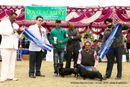 Amritsar Kennel Club | bob,dachshund standard- smooth haired,sw-136,