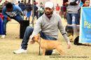 Amritsar Kennel Club | ex-51,french bulldog,sw-136,