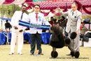 Amritsar Kennel Club | ex-55,poodle- standard,sw-136,