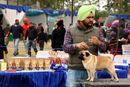 Amritsar Kennel Club | ex-19,pug,sw-136,