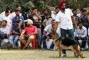 Amritsar Kennel Club | ex-206,german shepherd dog,gsd,sw-135,