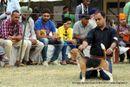 Amritsar Kennel Club | beagle,ex-48,sw-135,