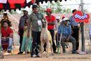 APKC Hyderabad | sw-11,ex-161,greatdane,
