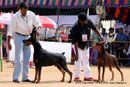 APKC Hyderabad | doberman,sw-11,ex-156,