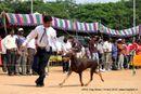 APKC Hyderabad | doberman,sw-11,ex-155,