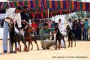 APKC Hyderabad | doberman,
