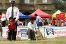 Bangalore 2010 | bog,bull dog,sw-12,
