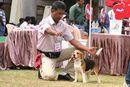 Bangalore 2010 | beagle,ex-100,sw-12,