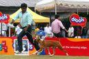 Bangalore 2010 | boxer,