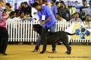 Bangalore Canine Club 2014 | neapolitan mastiff,sw-138,