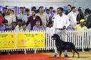 Bangalore Canine Club 2014 | rottweiler,sw-138,