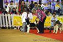 Bangalore Canine Club 2014 | akita,ex-27,sw-138,