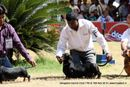 Bangalore Dog Show 2012 | dachshund,sw-69,