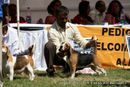 Bangalore Dog Show 2012 | beagle,ex-91,sw-69,