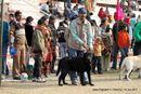 Bareilly Dog Show 2011 | sw-14, ex-60,labrador,