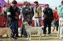 Bareilly Dog Show 2011 | sw-14, ex-94,labrador,