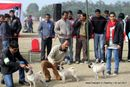 Bareilly Dog Show 2011 | sw-14, pug