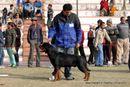 Bareilly Dog Show 2011 | sw-14, ex-146,rottweiler,