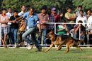 Baroda Dog Show 4th Nov 2012 | sw-64, alsatian,ex-162,gsd,sw-64,
