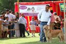Capital Kennel Club - 2014 | golden retriever,sw-128,