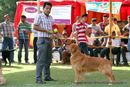 Capital Kennel Club - 2014 | ex-49,golden retriever,sw-128,