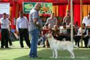 Capital Kennel Club - 2014 | ex-62,lab,labrador retriever,sw-128,