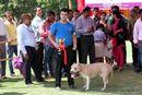 Capital Kennel Club - 2014 | american staffordshire terrier,ex-18,sw-128,