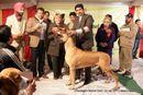 Chandigarh 2012 | bis,sw-50,