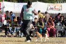 Dehradun Dog Show 2012 | beagle,ex-60,sw-73,