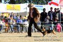 Dehradun Dog Show 2012 | beagle,ex-55,sw-73,