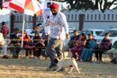 Dehradun Dog Show 2012 | ex-14,pug,sw-73,