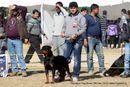 Dehradun Dog Show 2012 | ex-191,rottweiler,sw-73,