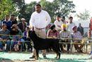 Dehradun Dog Show 2013 | sw-103,