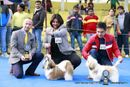 Delhi Kennel Club | bob,rbob,shih tzu,sw-145,