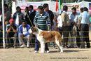 Doon Valley Kennel Club, 5 Dec 2010 | stbernard,sw-13,