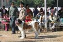 Doon Valley Kennel Club, 5 Dec 2010 | ex-204,stbernard,sw-13,