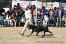 Doon Valley Kennel Club, 5 Dec 2010 | rottwieler,sw-13,
